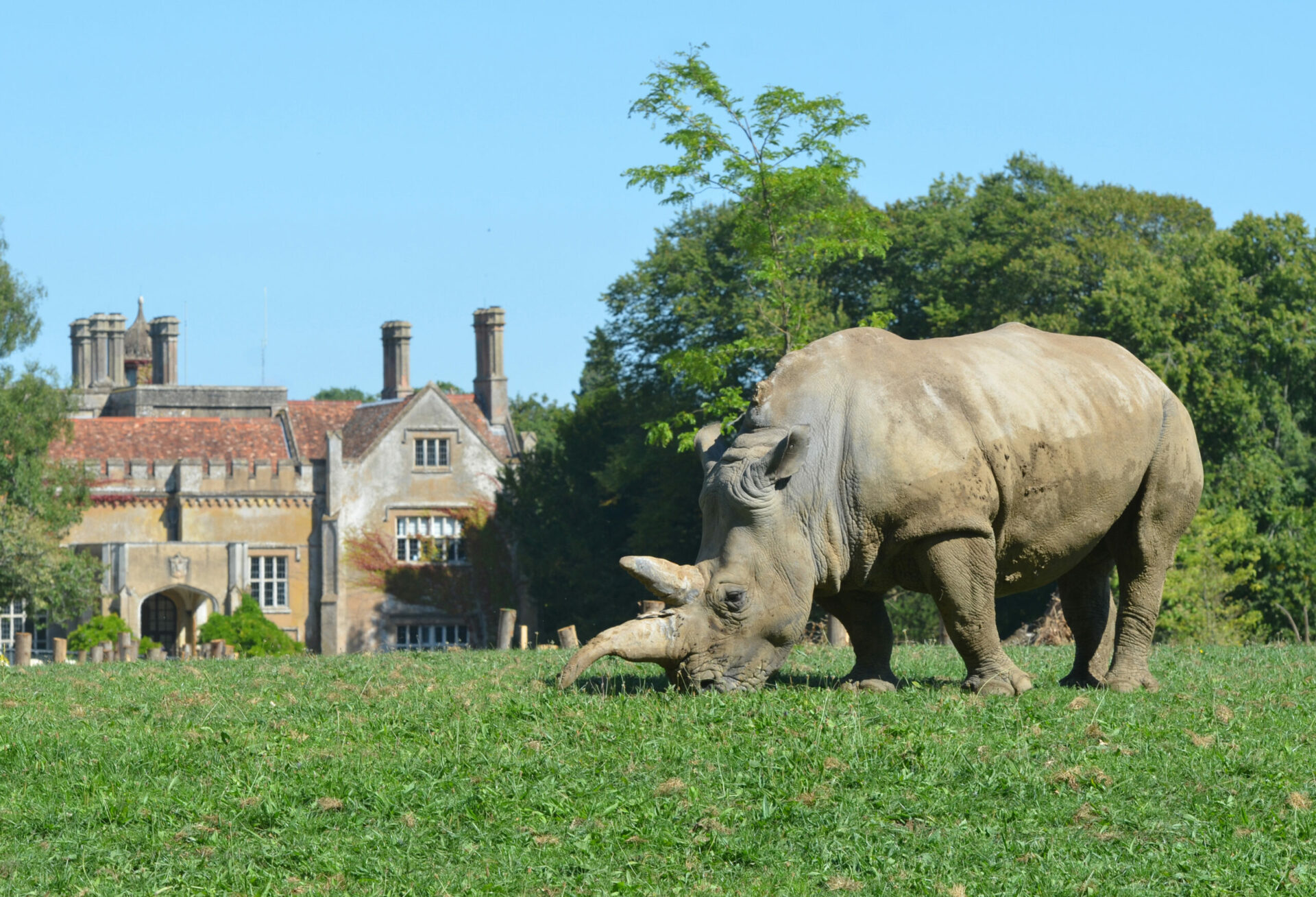 Photography Competition Credit Richard Beaman White Rhino Outside Marwell Hall