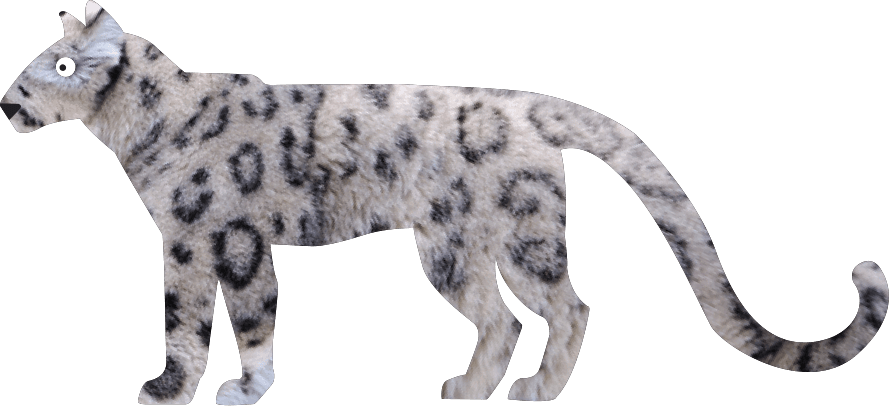 Snow Leopard Panthera Uncia Marwell Zoo Cartoon