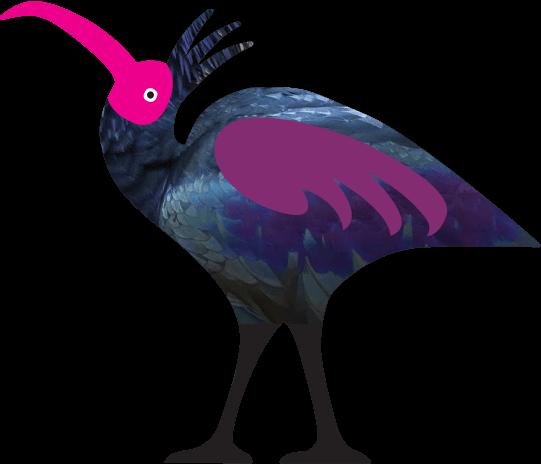 Northern Bald Ibis 2