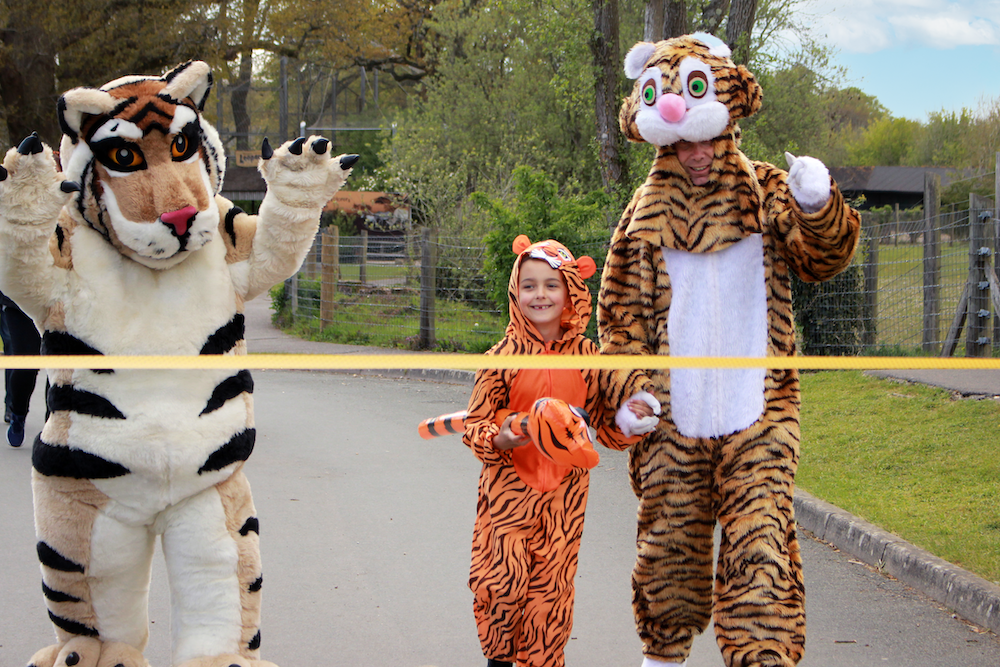 Tiger Teds Last Mile At Marwell Zoo Fundraising