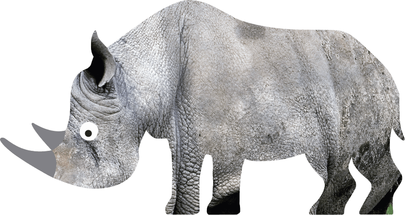 White Rhinoceros Ceratotherium Simum Marwell Zoo Cartoon