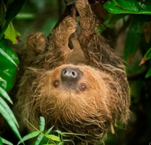 Zoo_photographer_ _credit_jason_brown_ _rica_22 09 18_3_24062019124612 2