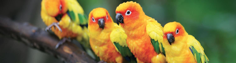 Birds-Marwell-Zoo