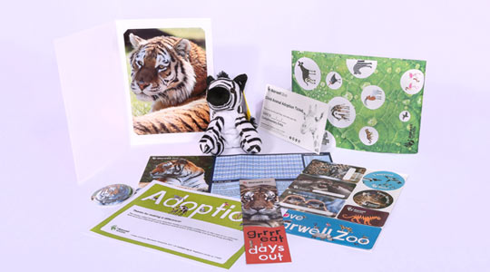adoption-package-3