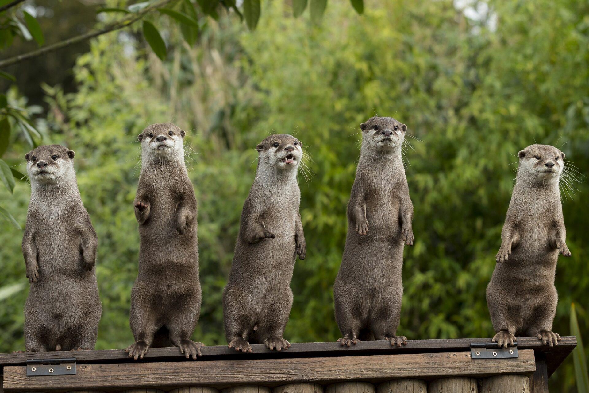 Jason Brown Otter Family Standing 1
