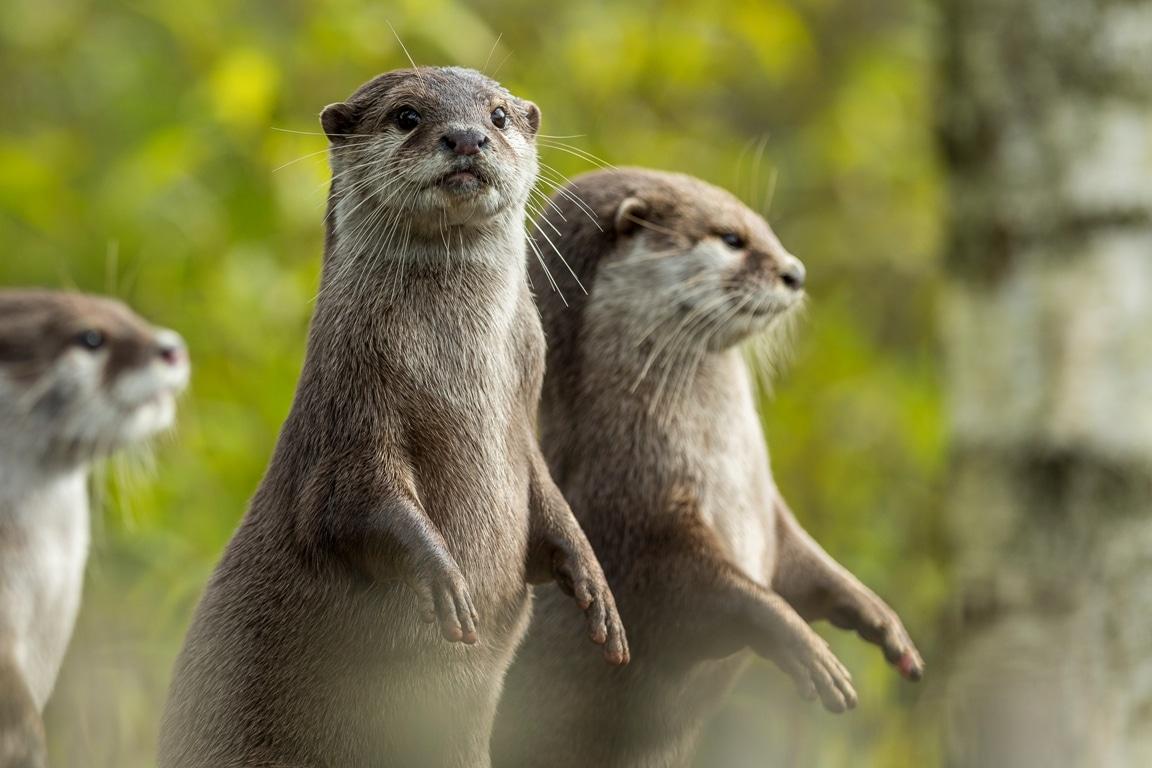 Jason Brown Otter Family Standing 2