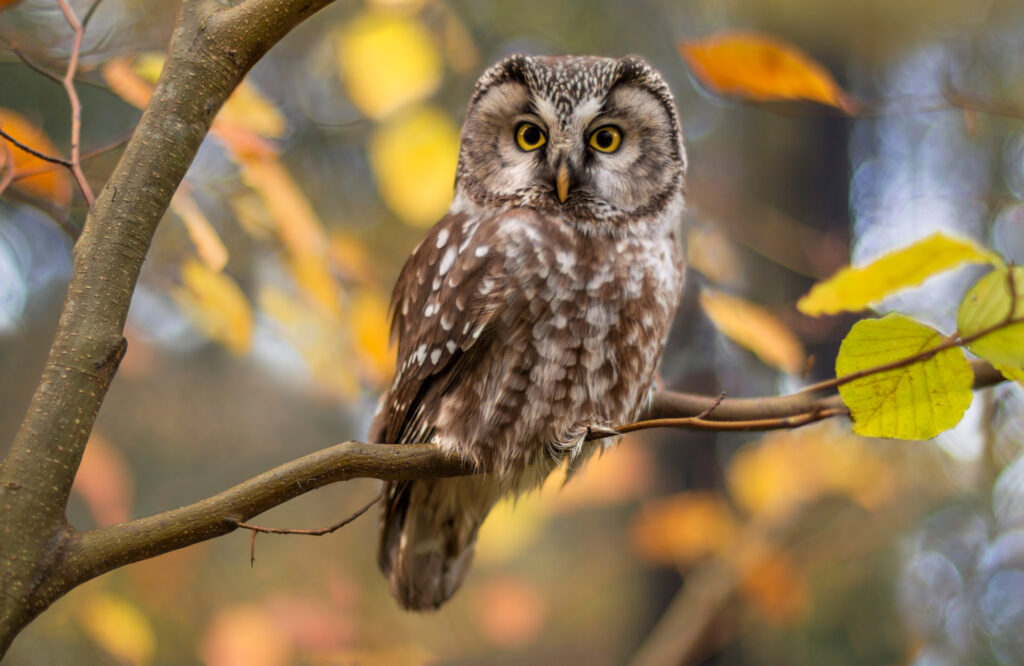weather-lottery-owl