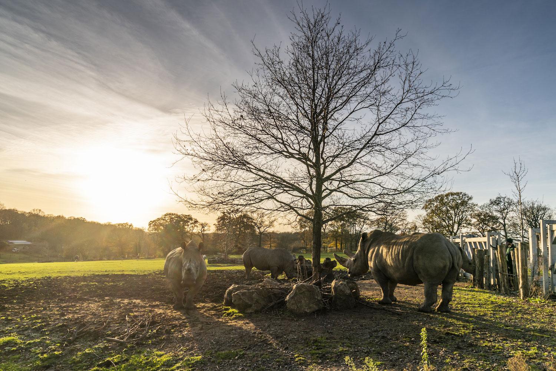Zoo Photographer Credit Jason Brown Wild Exploeres 3